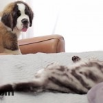 Dear Kitten – Regarding The Dog Video – Zefrank