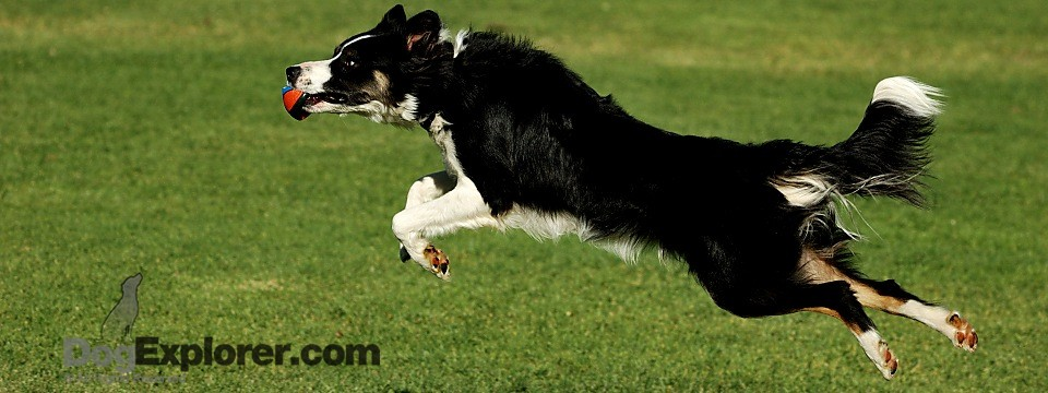 How Smart Are Dogs? NOVA Science Now Video