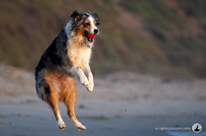 Charlie the Dancer by @realdogexplorer