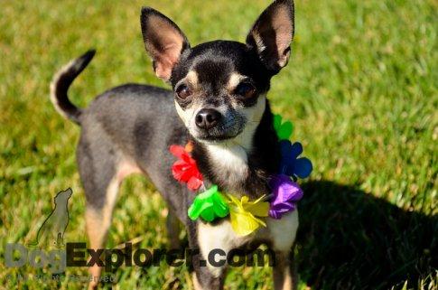 Pooch Parade Free Dog Training DVD Offer